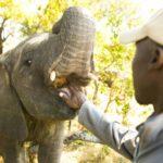 Światowy Dzień Słonia